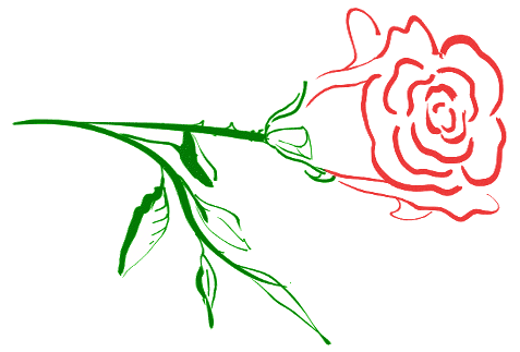 two_tone_rose