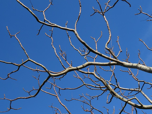 -branches-sky-blue-tree